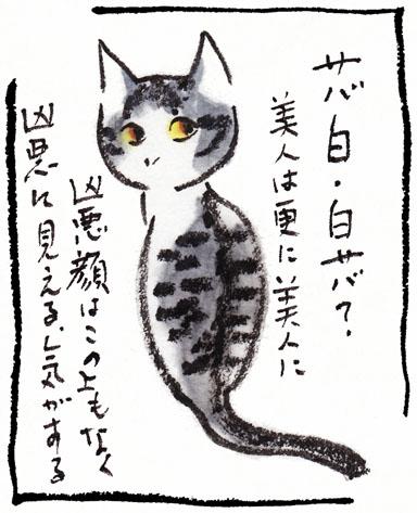 14_鯖白