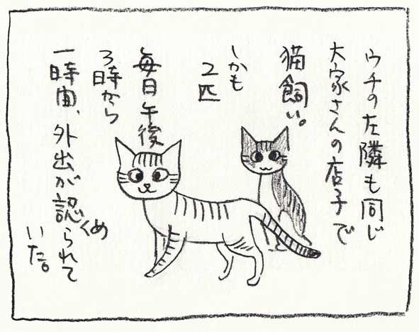 7_隣の猫