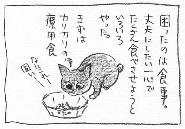 2_カリカリ固い