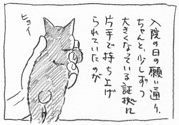 7_ヒョイ