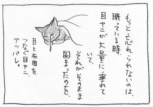 6_アッパレな目ヤニ