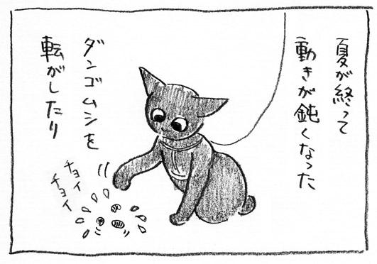3_ダンゴムシ