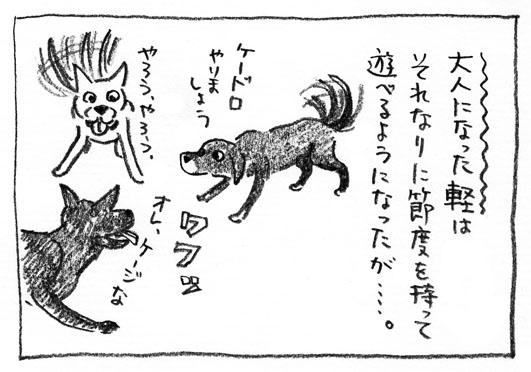 7_ケードロ