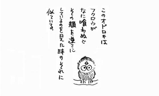 5_ふくろう