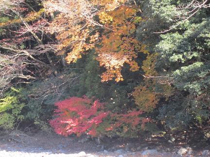 舞い落ちる葉1