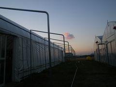 [写真]トイレまでの雨除けアーケード工事の様子(骨組みとなるパイプが打込まれたところ)空には夕焼雲