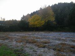 [写真]自宅前の畑に霜が降りている早朝の様子