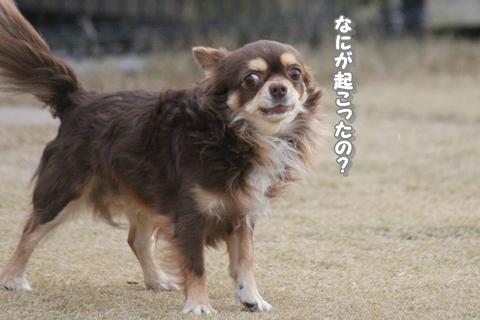 20121226-IMG_5691.jpg