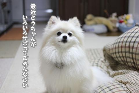 20121228-IMG_5858.jpg