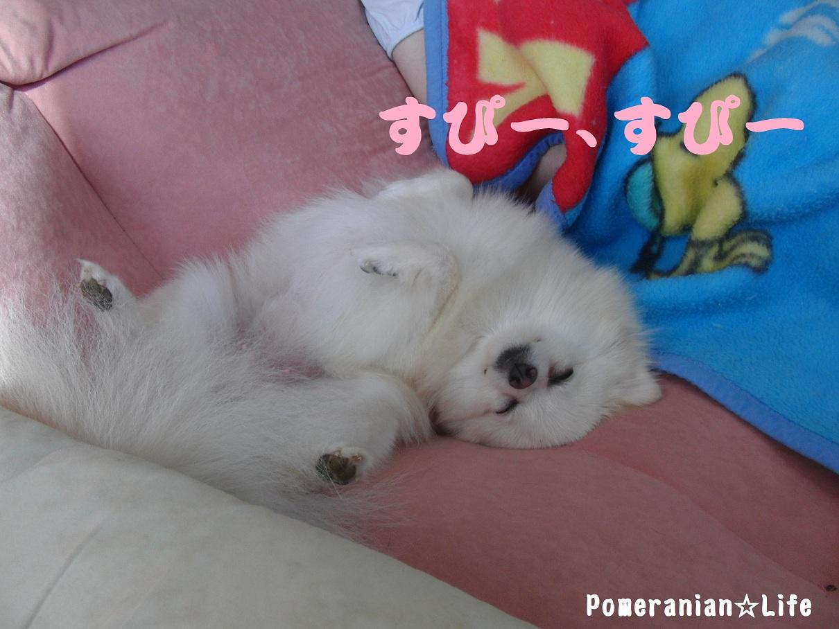 眠るまろん