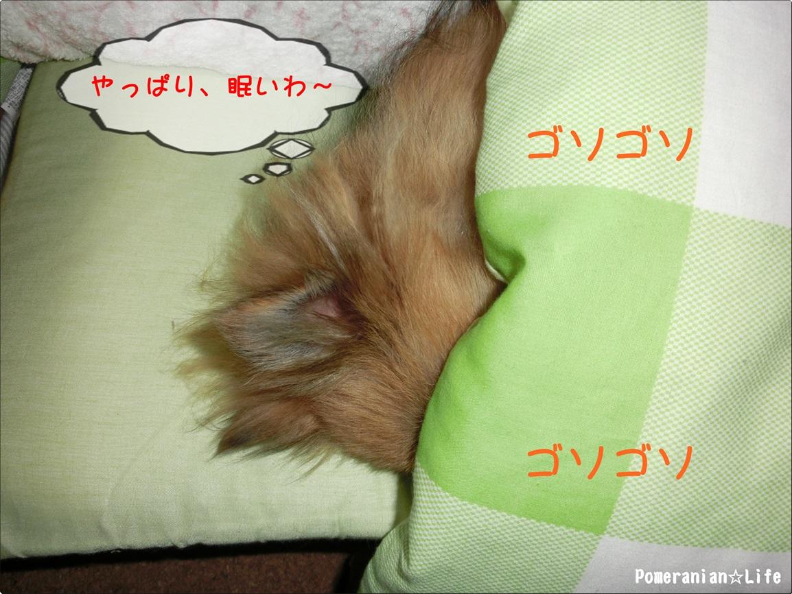 CIMG0641.jpg
