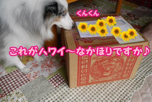 013_convert_20141027180549.jpg