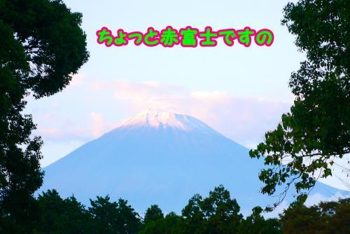019_convert_20141025180852.jpg