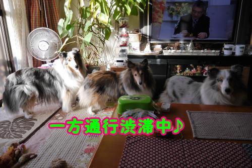 037_convert_20141115164630.jpg