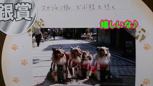 2014_convert_20141115164951.jpg