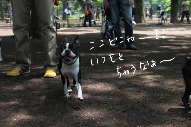 東京D 097_edited-1 (640x427)
