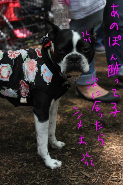 東京D 230_edited-1 (427x640)