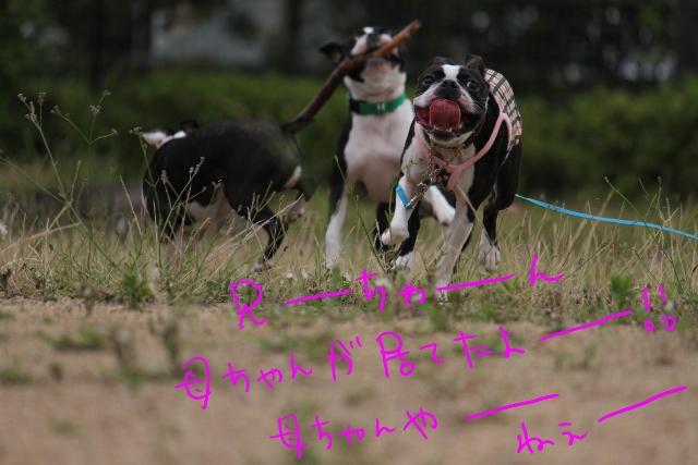 ぼりょぽんみりとめ 049_edited-1 (640x427)