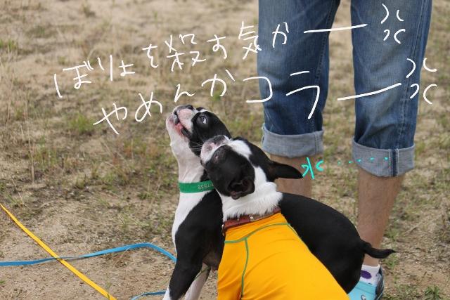 ぼりょぽんみりとめ 084_edited-1 (640x427)