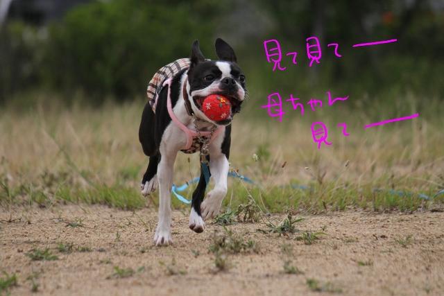 ぼりょぽんみりとめ 064_edited-1 (640x427)