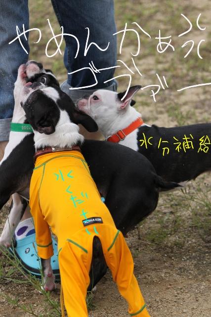 ぼりょぽんみりとめ 088_edited-1 (427x640)