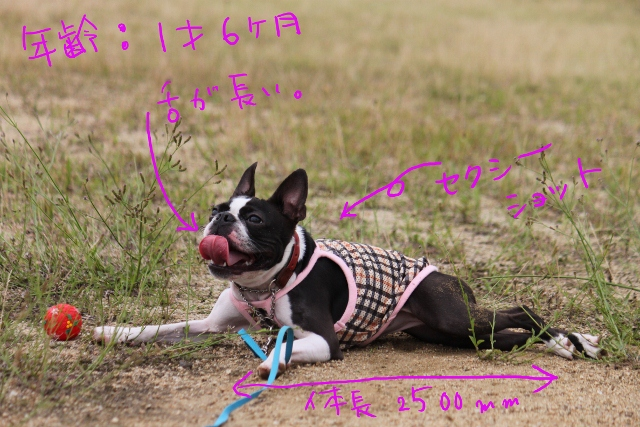 ぼりょぽんみりとめ 125_edited-1 (640x427)