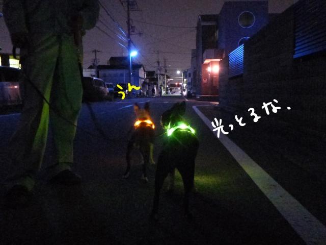 首輪 015_edited-1 (640x480)