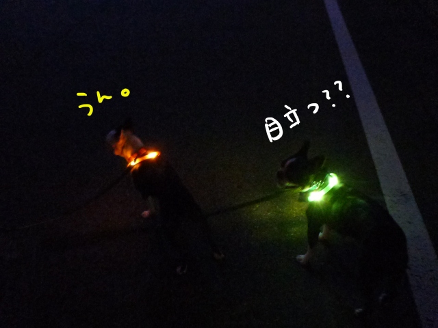首輪 012_edited-1 (640x480)