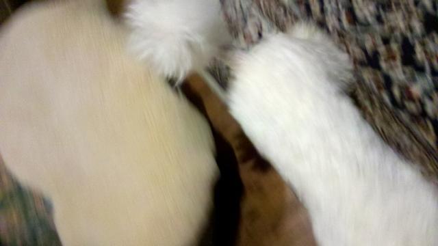2012-11-26_21-29-25_854 (640x360)