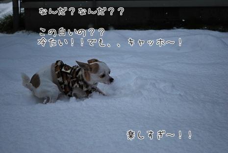 DSC_3045a.jpg