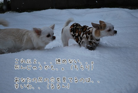 DSC_3048a.jpg
