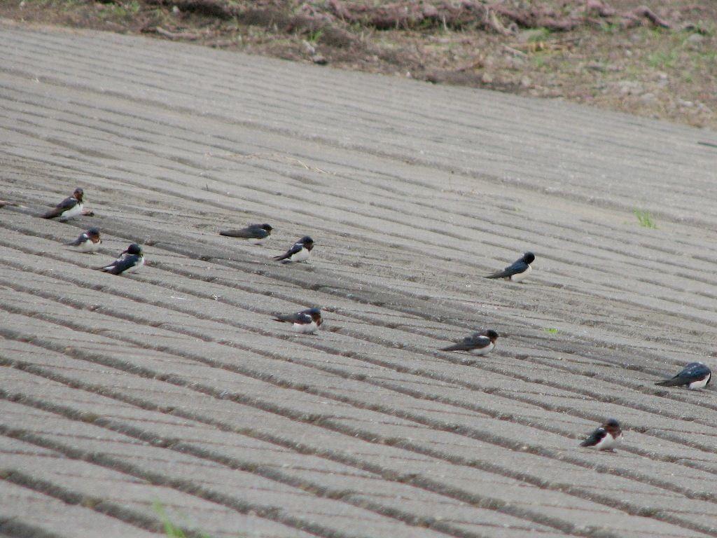 bird101.jpg