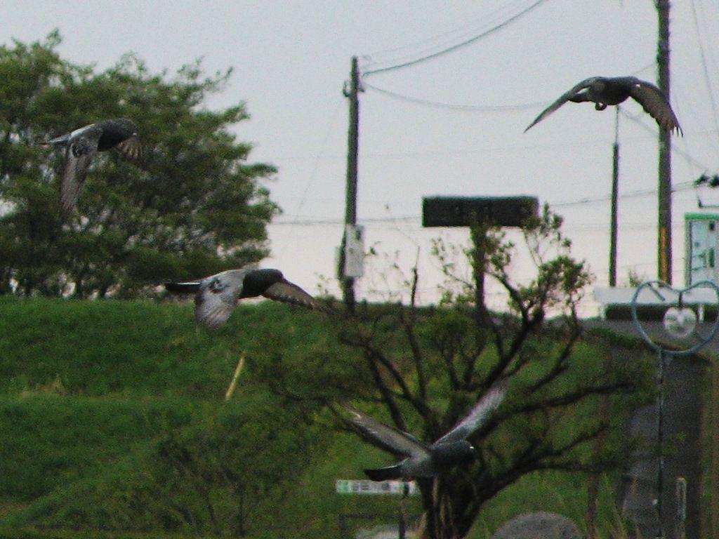 bird106.jpg