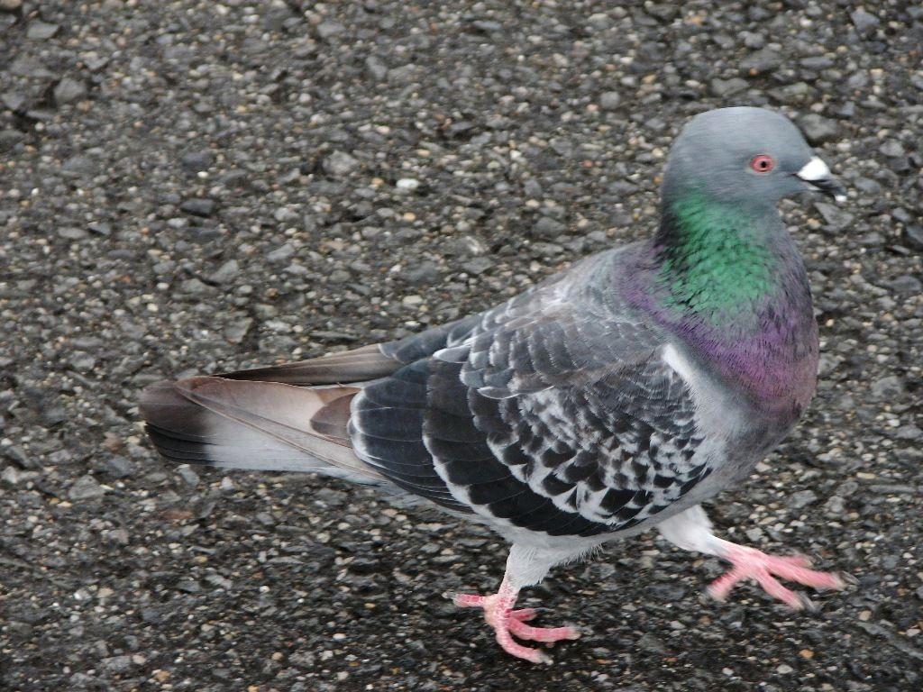 bird111.jpg