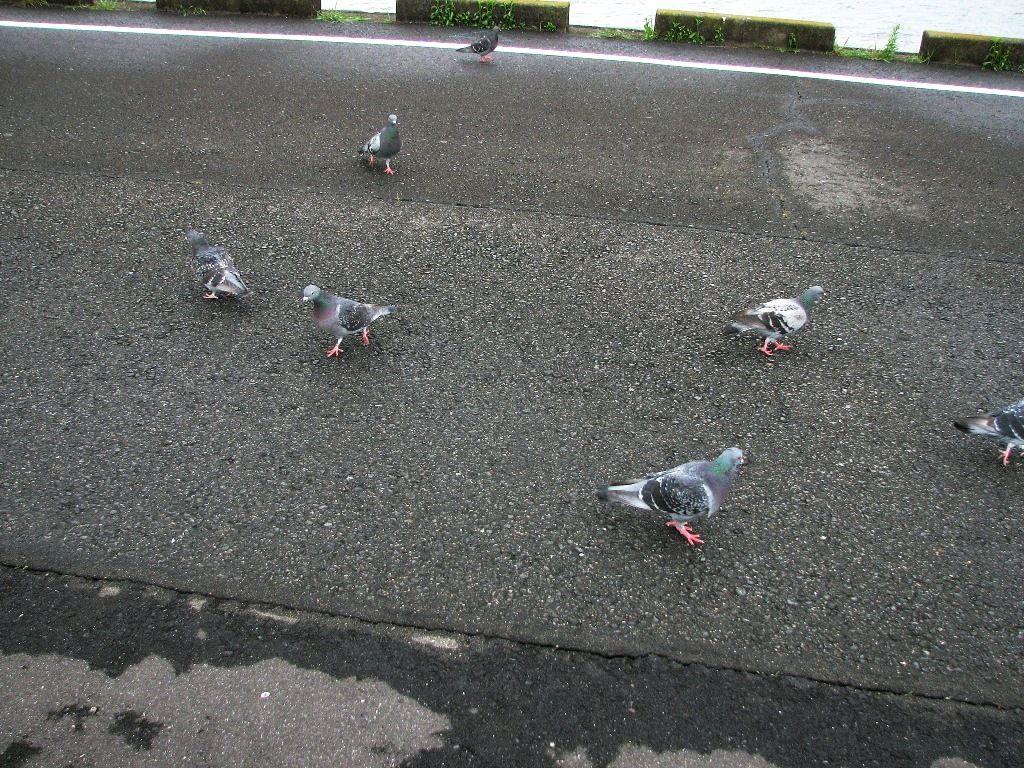 bird112.jpg