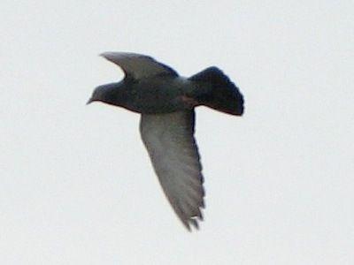 bird115.jpg