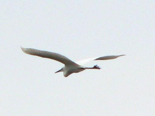 bird117.jpg