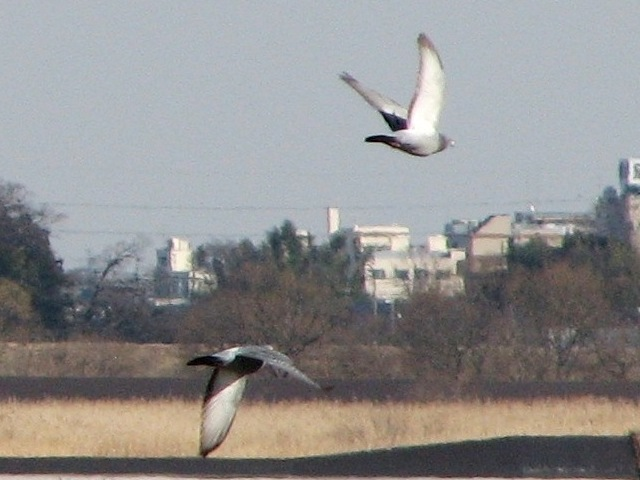 bird15.jpg