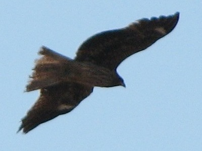 bird21.jpg