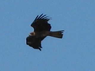 bird22.jpg