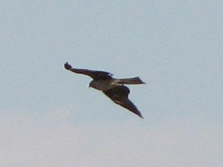bird26.jpg