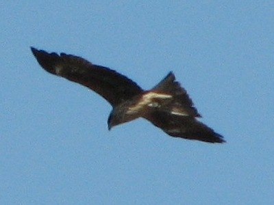 bird27.jpg
