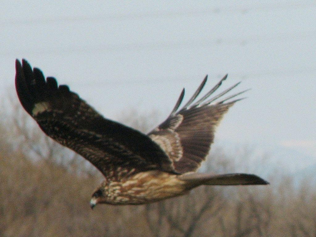 bird30.jpg