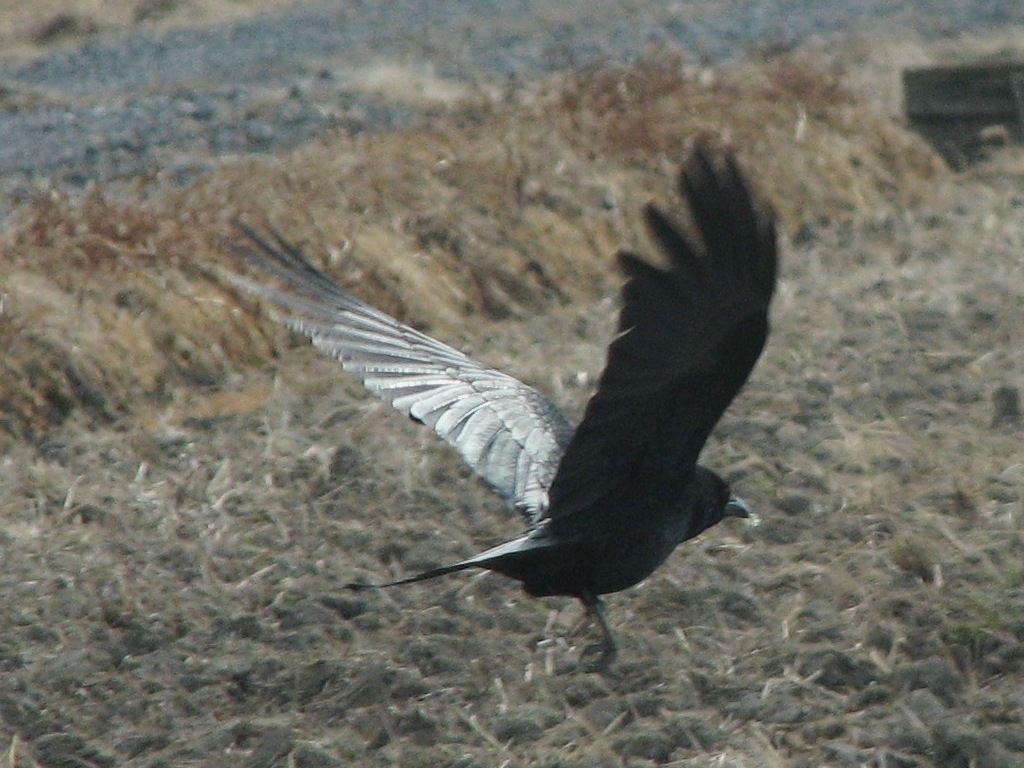 bird31.jpg