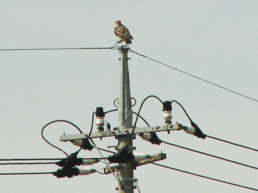 bird33.jpg