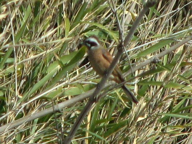 bird34.jpg