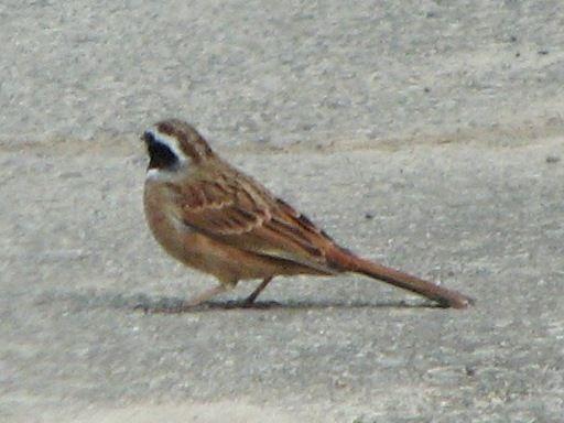 bird35.jpg
