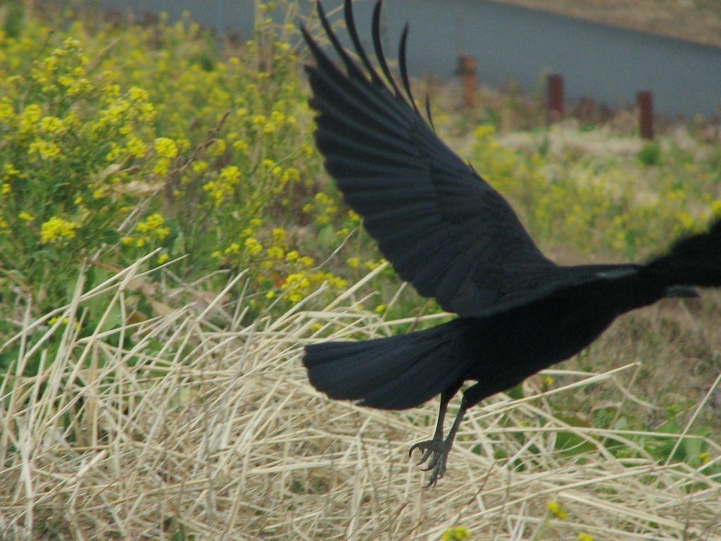 bird40.jpg