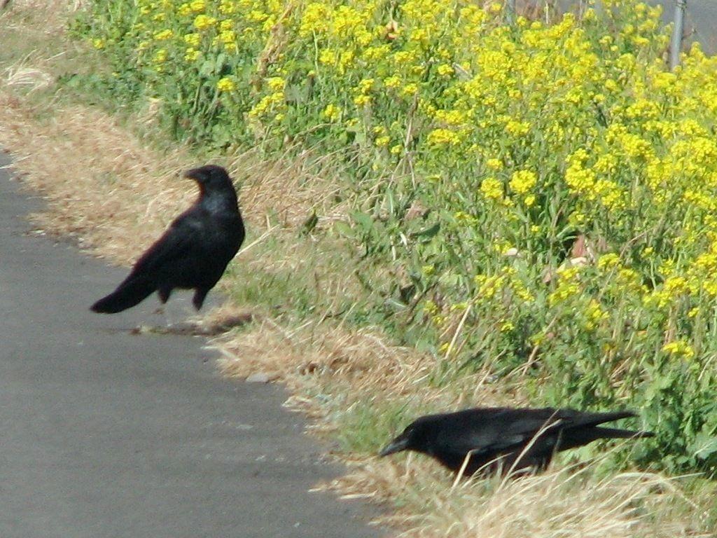 bird44.jpg