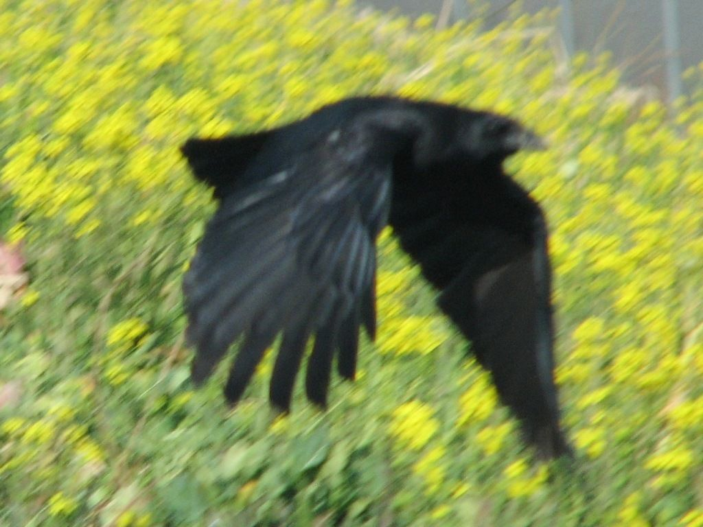 bird45.jpg